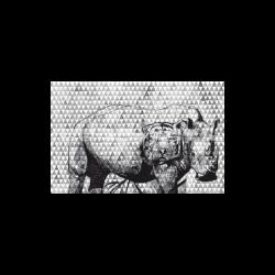Fotomurales de pared Rhino. Comprar fotomurales online de la marca Due